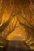 Dark-Hedges-drum-copaci-Antrim-Irlanda02